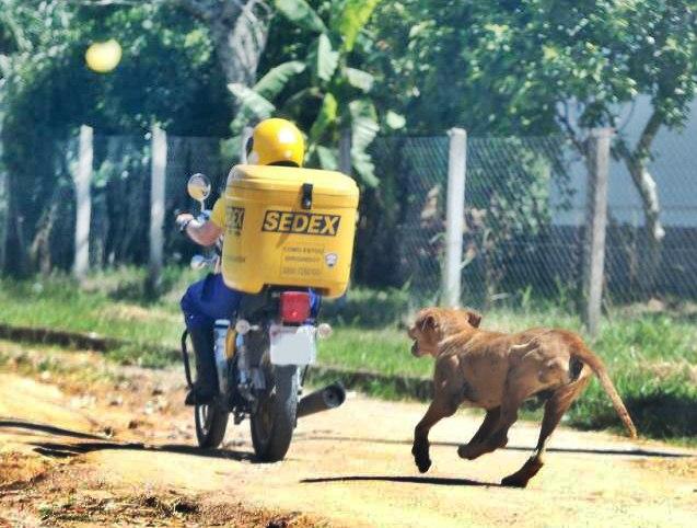 Carteiro pode deixar de fazer entregas em ruas de Irani por causa dos cachorros