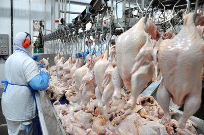 Arábia Saudita suspende importação de frango de 33 frigoríficos do Brasil