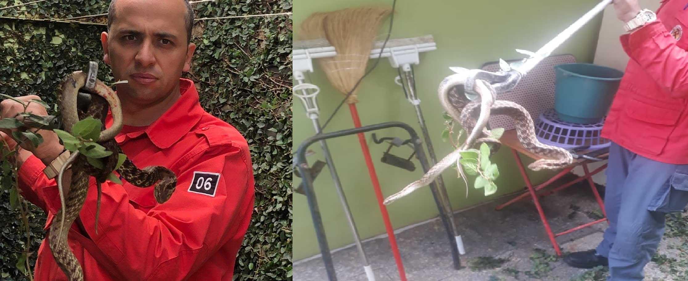 Morador encontra três cobras no pátio de casa em Concórdia