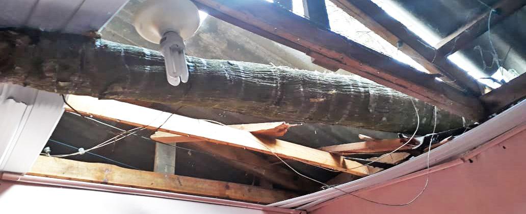 Vento derruba árvore sobre uma casa no bairro Nossa Senhora Aparecida em Seara