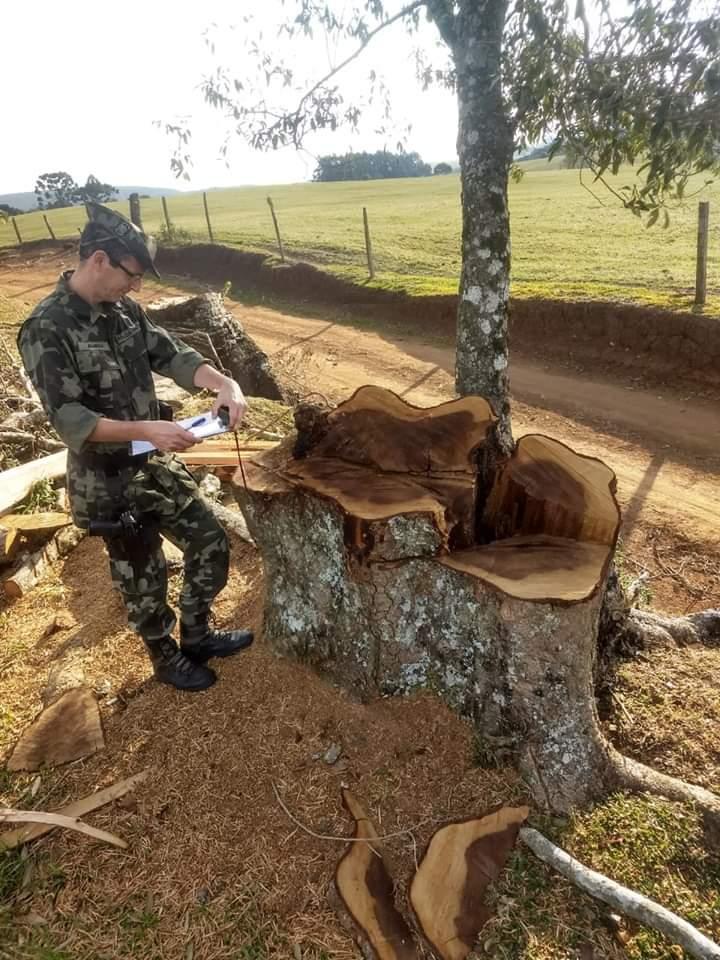 Ambiental de Concórdia flagra corte ilegal de vegetação na região