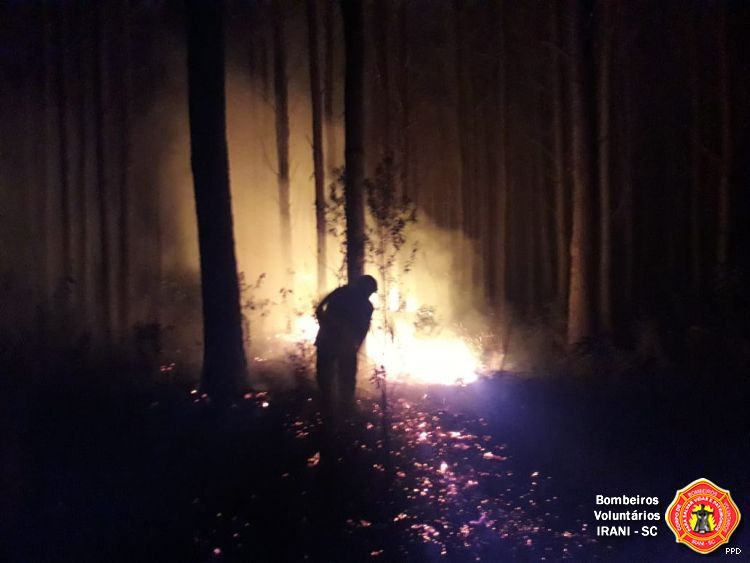 Incêndio em vegetação consome 40 mil metros quadrados no interior de Irani