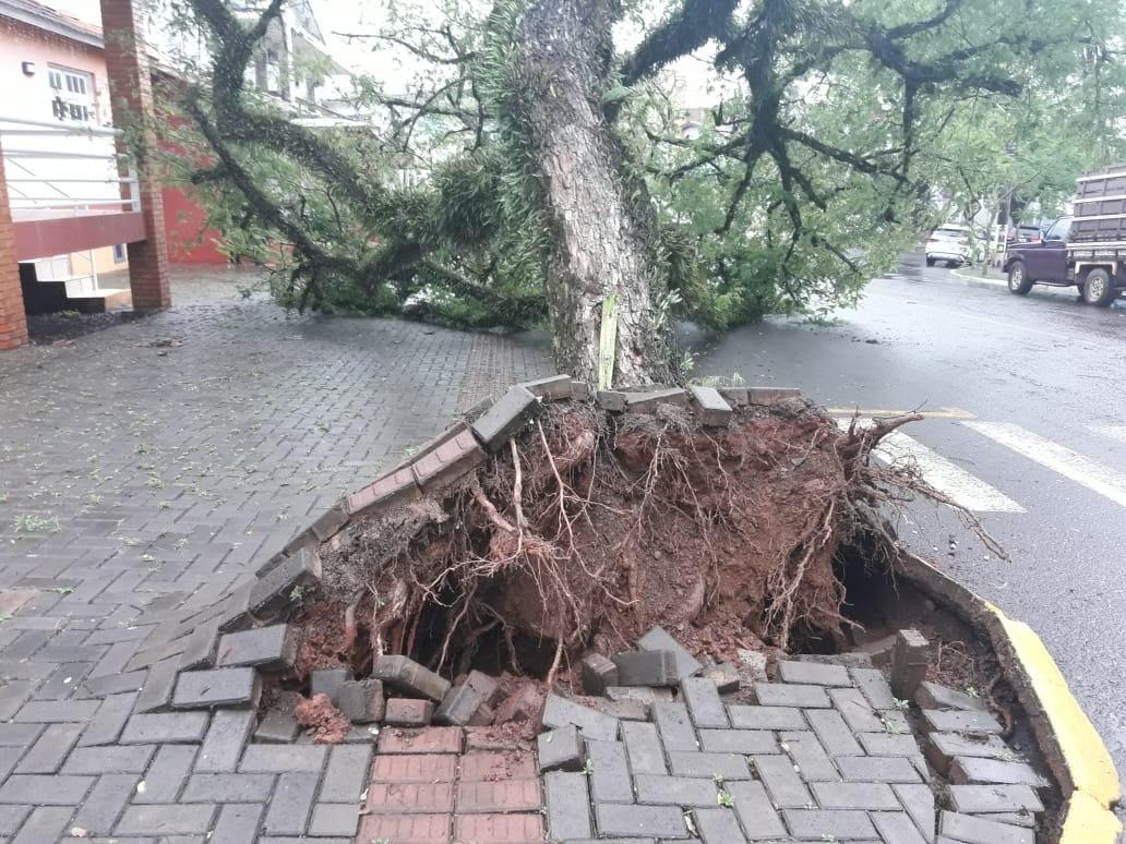 Árvore cai no centro de Itá e atinge uma casa