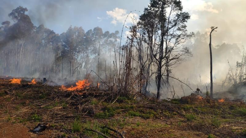 Incêndio em vegetação de grandes proporções em Catanduvas