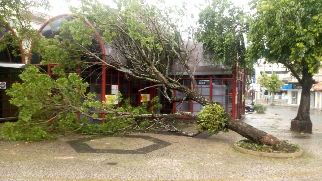 Chuva e vento causam transtornos em vários pontos de Concórdia
