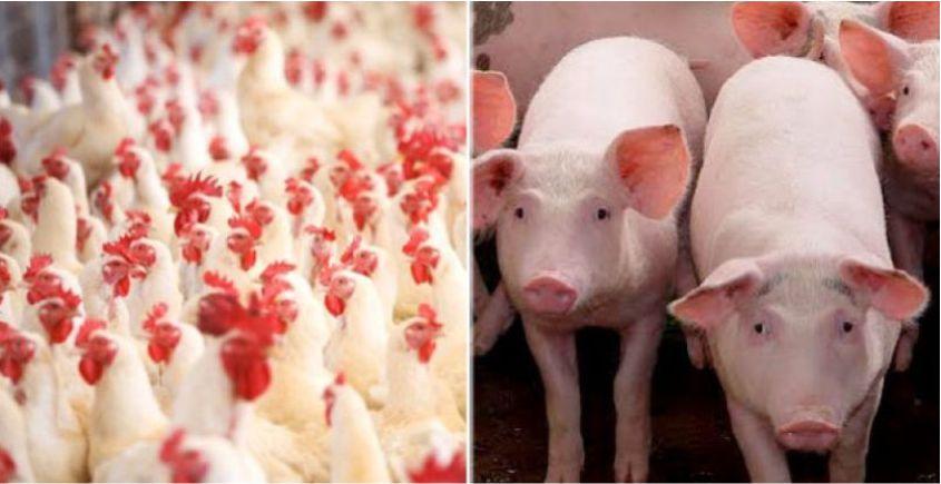 Governo de SC reduz para 7% a alíquota do ICMS para carnes de aves e suínos