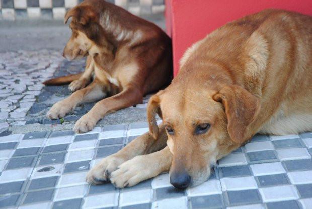 Delegacia Virtual de SC começa a registrar boletins de ocorrência de maus-tratos contra animais