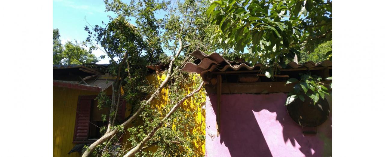 Árvore cai e atinge parcialmente uma residência em Concórdia