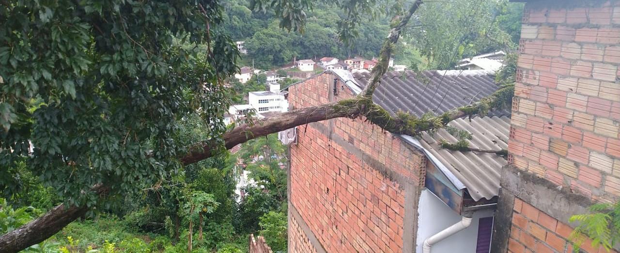 Árvore cai sobre residência na Vila União