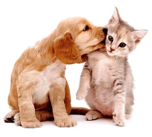 Concórdia terá Feira de Adoção de Cãe e Gatos neste sábado - OUÇA
