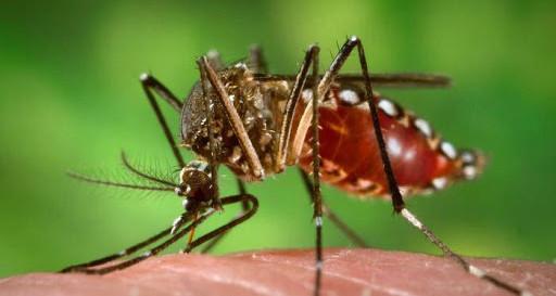 Concórdia registra o primeiro caso de dengue contraído no próprio município