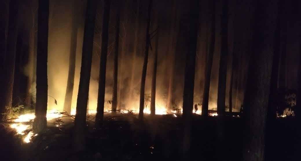 Incêndio consome cerca de 2 mil m² em área de reflorestamento