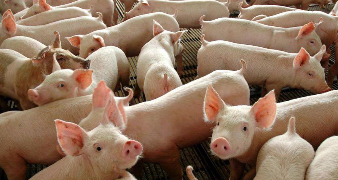 BRF anuncia aumento de mais de R$ 0,10 de aumento ao produtor integrado