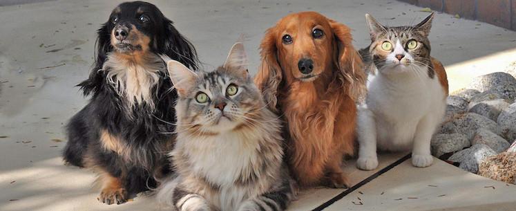 Con Animal segue resgatando animais durante a pandemia, mas necessita de doações
