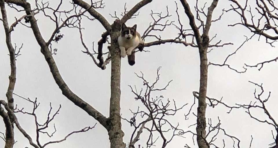 Bombeiros resgatam gato em árvore de 15 metros de altura - VÍDEO