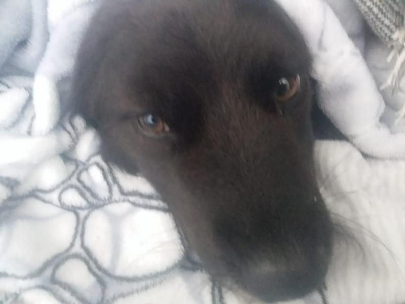 Moradores denunciam possível envenenamento de cães no Distrito de Santo Antônio