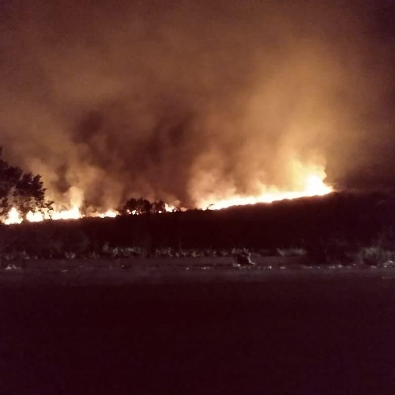Incêndio em vegetação em Irani queima 1,5 hectare de área