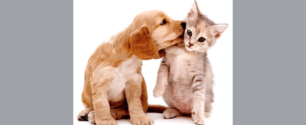 Con Animal vai realizar feira de adoção no sábado