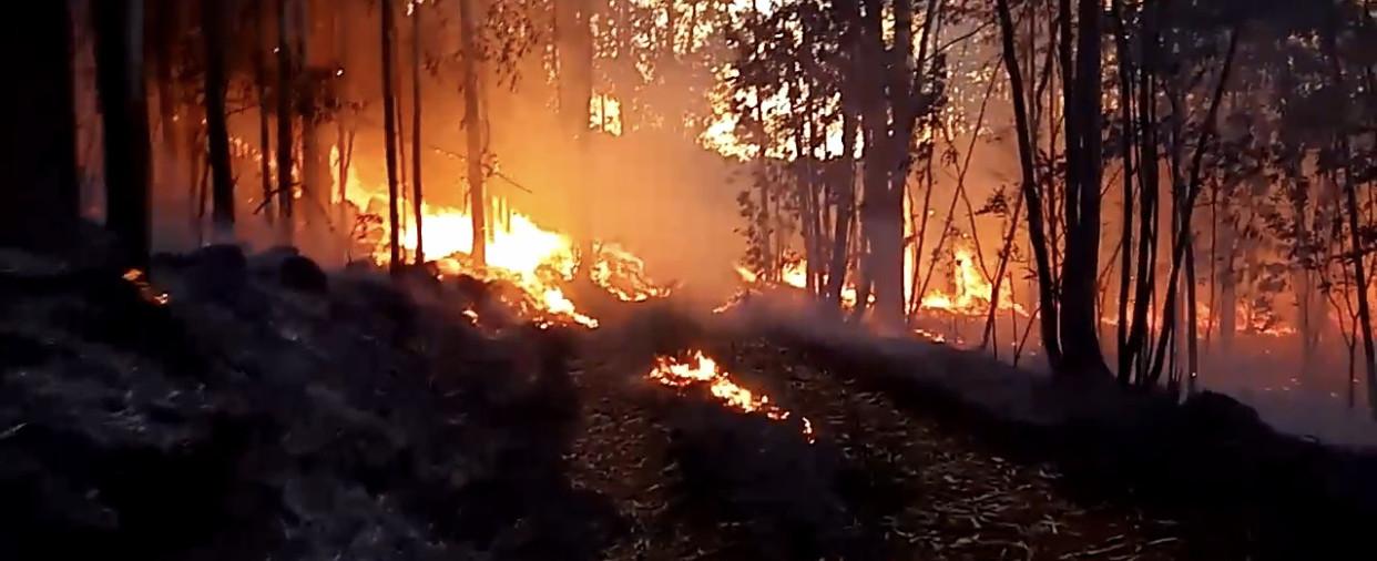Incêndio em vegetação queima 20 hectares no interior de Ipira