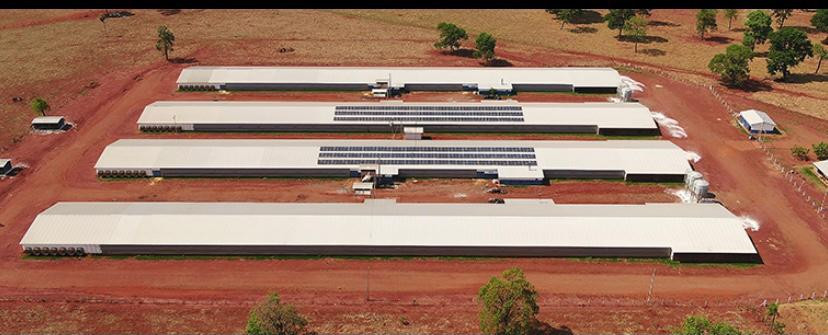 BRF anuncia programa de financiamento para implantação de energia renovável nas granjas