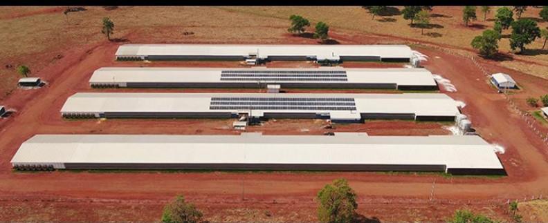 BRF oferece 37 vagas de trabalho em granjas e incubatórios da região