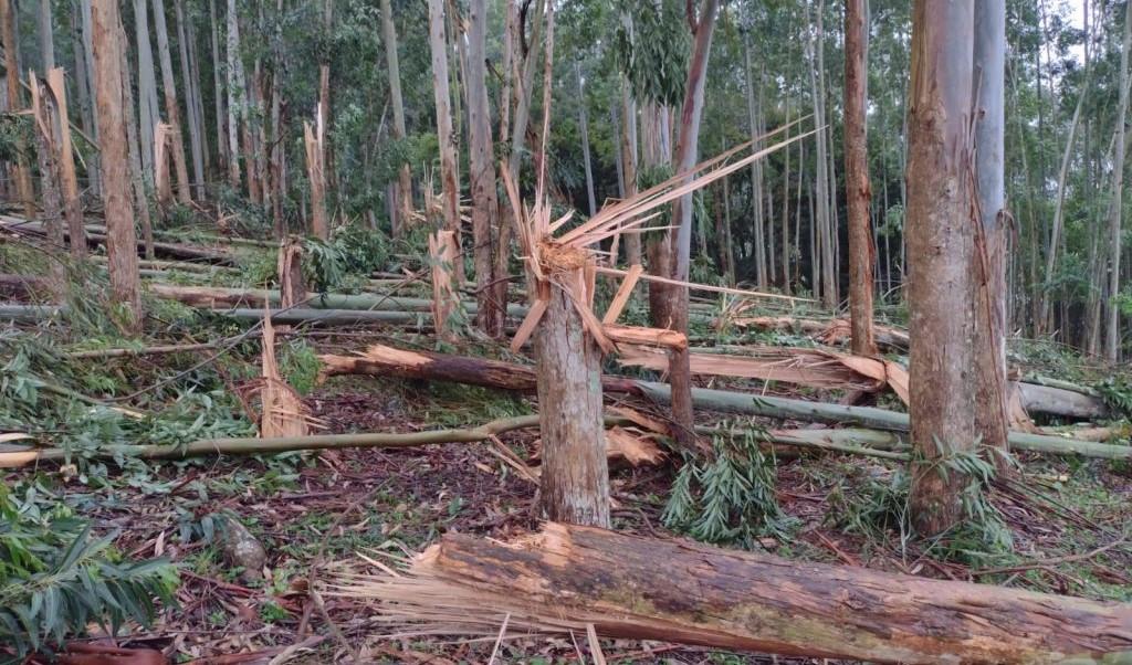 Defesa Civil de Santa Catarina confirma a ocorrência de tornado no interior de Seara