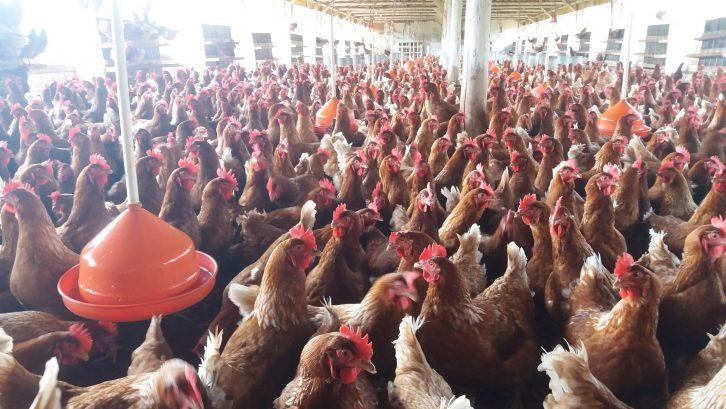 Santa Catarina encerra 2018 com alta nas exportações de carnes