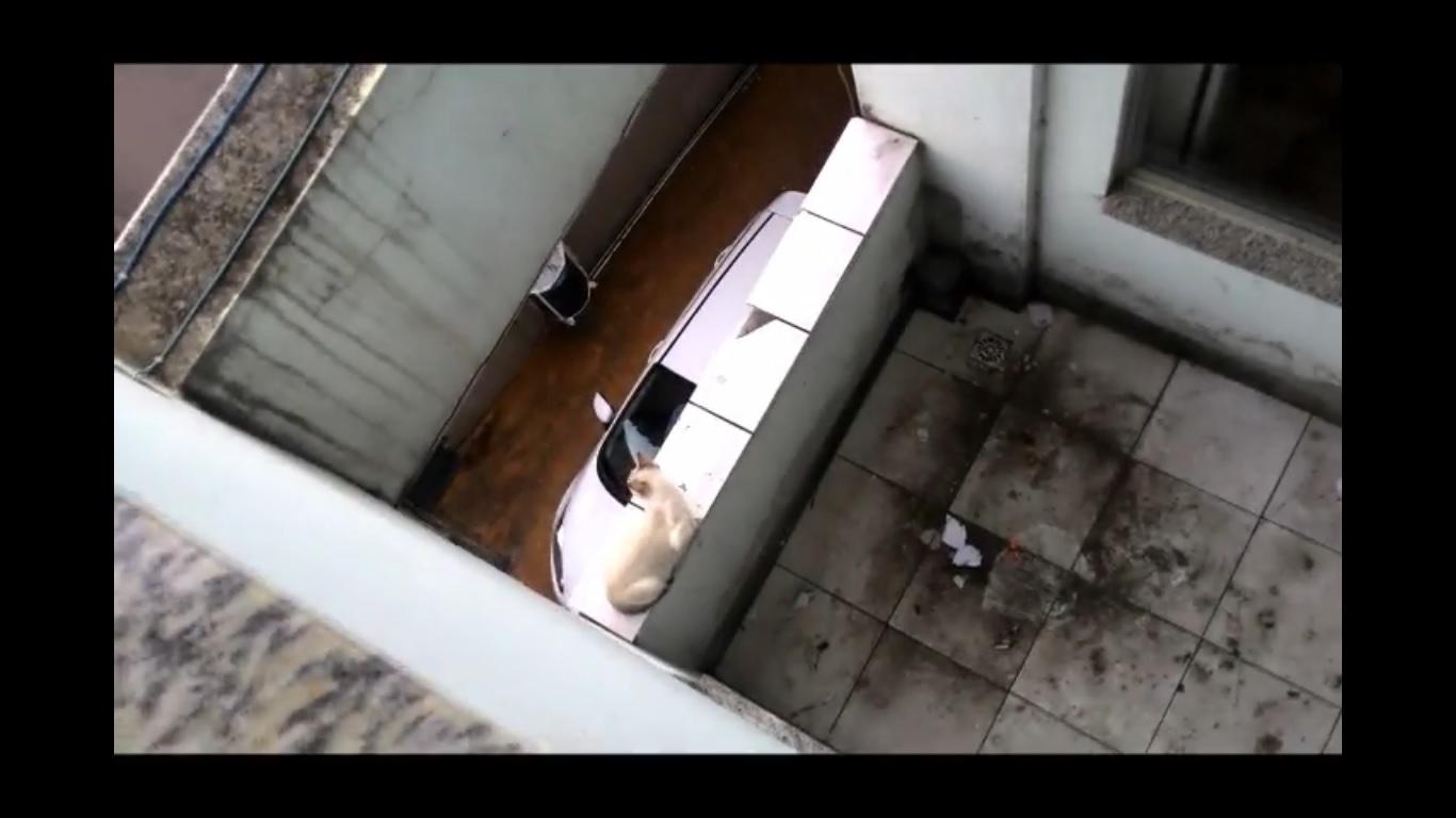 Vídeo mostra resgate de gato que caiu do quarto andar de um prédio