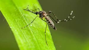 Região do Alto Uruguai registra 96 focos do mosquito da dengue'