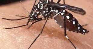 Saúde investiga suspeita de dengue em moradora de Xavantina