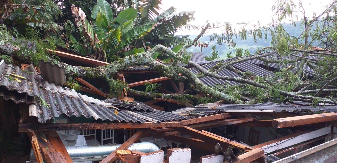 Chuva e vento derrubam árvores, destelham casas em Concórdia